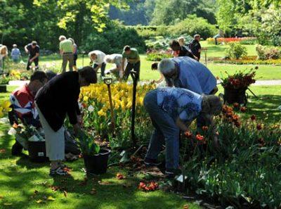 Lilien – zum selber Graben