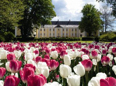 Danmarks største Tulipanfestival 2022