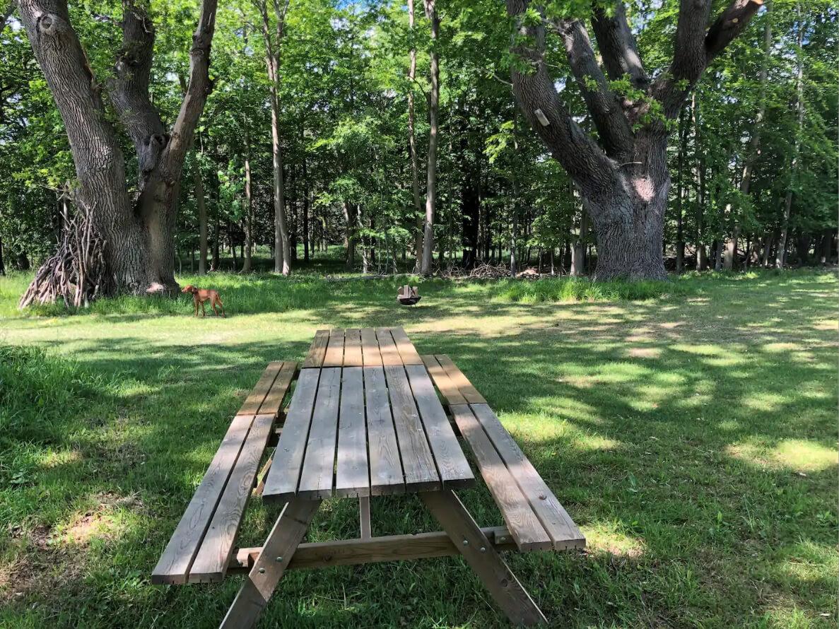 feriehus_gavnoe_picnic